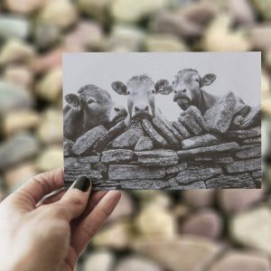 Grey print of three cows looking over a wall on a greeting card with blurred stone background