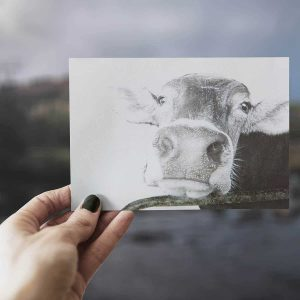 Grey drawing close up cow print greeting card with Irish lake out of focus background