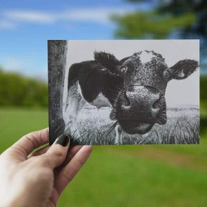 Funny grey close up cow print greeting card with soft out of focus Irish field background