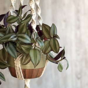 Close up of a plant hanger dangling with blurred soft wooden background