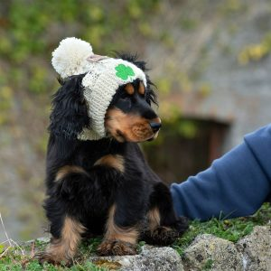 Dog wearing a cream hat with a shamrock on it.
