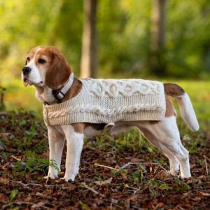 dog wearing sweater with forest in background